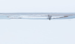 Cerknica Lake (happy.apple) Tags: otok cerknica slovenia si cerkniškojezero cerknicalake slovenija winter snow landscape snowstorm sneg zima presihajočejezero intermittentlake geotagged