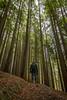 Bosque Secuoyas Cabezon de la Sal I (davidmp93) Tags: bosque forest secuoyas cantabria molino bolao acantilados waterfall catarata banco cloud longexposure nikon d3300 tokina