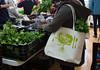 CitySeed_WinterMarket_01132018lr-016 (cityseednh) Tags: cityseed tote lettuce produce learosemarystudios