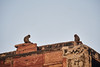 red fort (arcibald) Tags: redfort agra india uttarpradesh