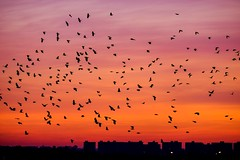 Sunrise, Ocean Parkway (AMRosario) Tags: morning sky dawn brooklyn orange lightroom sun sunrise colors yellow ditmaspark dramatic clouds red fujifilm newyorkcity xt20 kensington flying birds