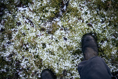 boots (Jos Mecklenfeld) Tags: boots stiefel laarzen wandelen wandern hiking winter snow schnee sneeuw wollinghuizen westerwolde groningen netherlands niederlande nederland sonya6000 sonyilce6000 selp1650 sonyepz1650mm nl