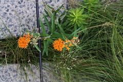 Between the cracks. (ktmqi) Tags: highline newyorkcity flower plant cement urban