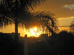 Sunrise in Sarasota (soniaadammurray - Off) Tags: digitalphotography sunrise sky clouds sun trees buildings golden nature