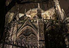 Grande Dame (Do Saulnier) Tags: cathedrale paris architecture nocturne notredame gargouille