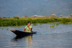 No roads in the floating villages of Inle Lake, Myanmar (Phil Marion) Tags: myanmar burmese asian oriental buddhist philmarion candid woman girl boy teen 裸 schlampe 나체상 벌거 desnudo chubby nackt nu ヌード nudo khỏa 性感的 malibog セクシー 婚禮 hijab nijab telanjang nude slim plump tranny sex slut nipples ass boobs tits upskirt naked sexy bondage fuck tattoo fetish erotic cameltoe feet cock desi japanese african khoathân latina khỏathân beach public swinger cosplay gay wife dick milf crossdress ladyboy babe