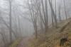 Misty Forest (Nereus[GER]) Tags: forest misty fog nebel wald woodland landscape landschaft nature canon eos 80d 2470mm f4 is usm lens objektiv saarland mettlach nereusger smerlot