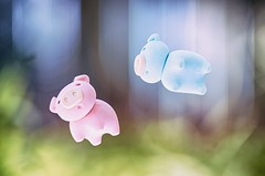 wait for me (♥GreenTea♥) Tags: pig eraser pigeraser pigs erasers pigerasers bluepig pinkpig blue pink macro bokeh iwako iwakoeraser iwakoerasers イワコー t1i canon canont1i canont1irebel canonrebel eos canoneosrebelt1i ef100mmf28macrousm canonef100mmf28macro hdr googlenikcollection nikcollection colorefexpro viveza hdrefexpro fly flying levitation levitating float floating
