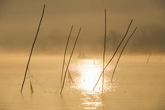 (Cristiano Pelagracci) Tags: sunrise sun nature orange fog lake trasimeno