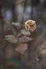 DSC09822 (@saka) Tags: autoupload flowers 61236124 trees 122 street 262