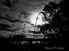 375. ROMANTIC NIGHT: The Moon Represents My Heart (Meili-PP Hua 2) Tags: plant plants flora leaves mlpphflora grass flax weeds bandw blackandwhitephotography blackandwhite monochrome trees clouds moon dark night dusk landscape cloudy mlpphlandscape ocean sea lake shadows silhouettes blackandwhtie blackwhite flaxflowerheads tree tallgrass beachgrass water whiteblack blackwhitephotography whiteblackphotography bw monochromatic gray grey white black mlpphbwphotos photographypassionsxyz coast coastal marine seaside bay seashore waves sky misty haze foggy fog nature shrubs slihouettes backlit backlighting evening twilight