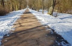 Alley in Hildburghausen´s park (:Linda:) Tags: germany thuringia town hildburghausen snow alley tree park bridge