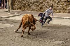 TOREANDO EN LA CALLE (Josinisam) Tags: toro medinaderioseco valladolid castillayleón josinisam fiesta carnaval 2018