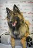 Göteborgs Charmigaste Hund 2018 (Svenska Mässan) Tags: hundar göteborgscharmigastehund mydog hundmässa 2018 dog