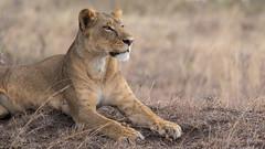 Nairobi-Nationalpark-9648 (ovg2012) Tags: kenia kenya nairobi nairobinationalpark