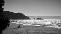 Otama 2018 - On the Beach 27 (C & R Driver-Burgess) Tags: beach family boy girls young man women together sun summer sand surf blue sky sea pohutukawa new zealand aotearoa white gold dog