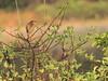 Green Heron 01-20180301 (Kenneth Cole Schneider) Tags: florida miramar westmiramarwca