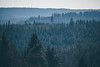 The Black Forest (freyavev) Tags: kniebis schwarzwald blackforest forest trees badenwürttemberg germany deutschland firtrees telelens hazy atmospheric nature vsco outdoor canon canon700d hiking