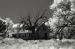 Baca County, Colorado (unknown quantity) Tags: sky monochrome shadows trees abandonedhouse grass peelingpaint deterioration deadtrees blackandwhite weathered