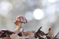 Luz del bosque (antonio palmeras palmeras) Tags: naturaleza setas macro