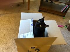 New Box! (+David+) Tags: andy cat blackcat newbox