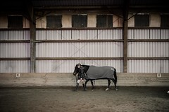 (nikpixnyc) Tags: horse back riding sony alpha 6500 a6500 animal barn candid long island 50m indoors