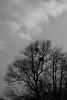spring sky (Amselchen) Tags: mono monochrome blackandwhite black sony a7rii alpha7rm2 samyang 85mmf14 sonyilce7rm2 clouds season spring
