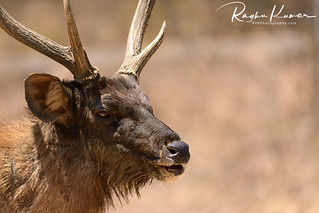 Deer Safari, Anna Zoological Park