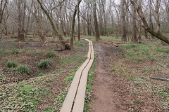 Out for a weird walk on planks on a floodplain on the southern Piedmont in northern South Carolina in late December in a nature preserve. (Tim Kiser) Tags: 2017 20171227 conestee conesteesouthcarolina december december2017 froggybottomlink greenville greenvillecounty greenvillecountysouthcarolina greenvillecountylandscape greenvillesouthcarolina greenvillelandscape greenvillemetropolitanarea greenvillespartanburg img5835 lakeconesteenaturepark lakeconesteelandscape piedmont piedmontforest piedmontlandscape piedmontregion reedyriverfloodplain southcarolina southcarolinalandscape upcountry upcountrysouthcarolina upstate upstatesouthcarolina boards boardwalk boardwalklandscape floodplain floodplainforest floodplainlandscape forestlandscape landscape mud muddyarea narrowtrail natureboardwalk naturepark naturetrail northernsouthcarolina northwesternsouthcarolina park planktrail planks temperatedeciduousforest trail traillandscape winterforest winterlandscape winterwoodland woodedlandscape unitedstates us