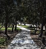 Endless Path (Eternal AZ) Tags: lordoftherings deep quotes nature photography park tolkien