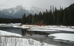 Banff Parkway Spring Break Up (Mr. Happy Face - Peace :)) Tags: art2018 landscape scenery rockies mountains snowcaps spring lakelouise alberta canada cans2s nature springbreak yyc