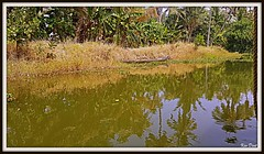 20180209_122026 (Uner Villa 5) Tags: india kerala backwaters alleppey cochin trivandrum varkala kovalam taj mahal kumarakom sub continent jungle quality surroundings world maharajah gypsy princess hindu hindi asia travel indie religion brahma shiva ganesh kings travelphotography national geographic gods own country