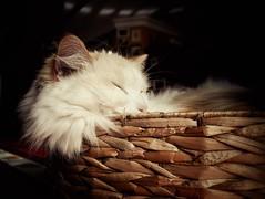 Catnap (J.C. Moyer) Tags: jamestheragdoll james nap catnap cat redcat pet cute catbasket catbed colour color saturday rustic whiskers panasonicdmcgx80