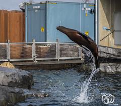 wildlands-emmen-12 (voorhammr) Tags: 2018 juul robin apen emmen giraffen ijsberen neushoorn nijlpaard pinquins prairiehonden vlinders wildlands zeeleeuwen zoo drenthe nederland nl