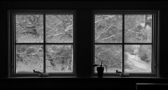 Outside, the Storm (brucetopher) Tags: black white blackandwhite bw blackwhite monochrome mono window storm weather ice blizzsard snow snowing icy cold winter glass through lookingthrough lookingout watching
