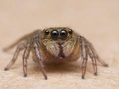 Lucas the Spider (adammaniam) Tags: spider