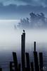 Sooke harbour (MB*photo) Tags: canada été vancouverisland britishcolumbia summer rain wwwifmbch fog sea ambiance silhouette bird sooke