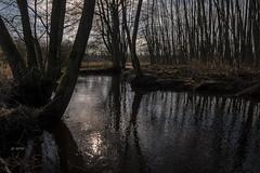 an der Wümme (hph46) Tags: königsmoor wümme wistedt niedersachsen deutschland germany fluss river bäume gegenlicht sony alpha6500 canonef1635mm14lisusm