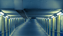 The Lady and the Dog II - Hongkong 106/188 (*Capture the Moment*) Tags: 2017 dog frau hongkong hund lady nacht nachtaufnahmen night nightshot sonya7m2 sonya7mii sonya7mark2 sonya7ii sonyfe2470mmf4zaoss sonyilce7m2 tunnel