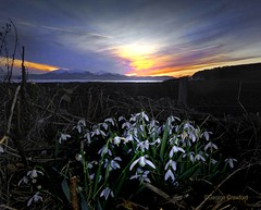 Snowdrops and Gloaming (g crawford) Tags: ayrshire ayrshirecoast northayrshire crawford clyde river clydecoast water snowdrops arran flowers wildflowers sunset sundown gloaming sky portencross portencrossroad westkilbride ardneilbay ardneil dusk snow 163 pod potd pictureoftheday herald glasgowherald