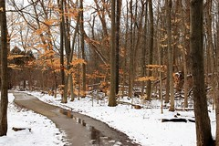 The Return of Snow (Haytham M.) Tags: canada ontario golden gold water path leftover leaves plants tree walk trees snow