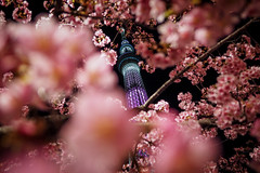 SKYTREE|晴空塔 (里卡豆) Tags: sumidaku tōkyōto 日本 jp penf olympus panasonicleicadg12mmf14 panasonic leica dg 12mm f14 晴空塔 天空樹 skytree