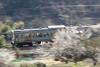 Train (seiji2012) Tags: 裏高尾 荒井梅林 梅園 中央線 流し撮り blur bokeh ume apricot hachiouji uratakao