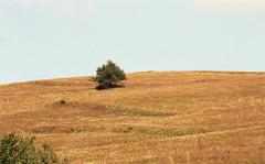 GOLDEN HILL (NaKLISZY) Tags: beskidniski beskidy widok krajobraz analog canoneos300 kodakportra400 drzewo tree meadow łąka golden złoty landscape mountain góry