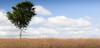 Above the clouds on a summer meadow (Beppe Rijs) Tags: deutschland germany schleswigholstein schlei wolken wolkendecke landschaft landscape natur nature field feld gras baum tree horizont horizon clouds line linie rural ländlich acker himmel sky wood holz