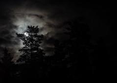 Månen lyser stark genom molnen bortom talltopparna (Mange J) Tags: fs180304 k3ii magnusjakobsson pentax sverige sweden värmland beauty cloud contour forrest fotosondag fotosöndag moon nature pentaxart sky stark tree wood värmlandslän se