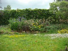 buttercup and daisy lawn (louise in northumberland) Tags: northumberland wylam mygarden garden