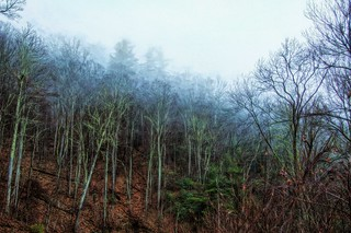 Foggy Forest 33