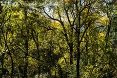 EL BOSQUE ENMARAÑADO (bacasr) Tags: trees maraña spain monteabantos bosque forest hiking senderismo caminando madrid tangledmess árboles españa elescorial naturaleza nature