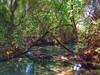 BONITO - Rio Sucuri (sileneandrade10) Tags: sileneandrade bonito turismo viagem paisagem landscape nikoncoolpixp900 nikon arte
